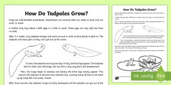 How Do Tadpoles Grow? Explanation Writing Sample-Australia - literacy, explanations, writing, text types, types of text, writing sample, year 3, year 4, stage tw