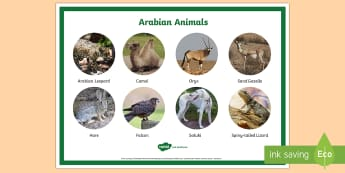 Arabian Animals Display Poster - Science, Living World, animals, Arabian, UAE, habitats, desert, camel, oryx, saluki, falcon, lizard,