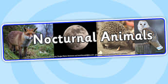 Nocturnal Animals Photo Display Banner - nocturnal animals, photo display banner, photo banner, display banner, banner,  banner for display, display photo