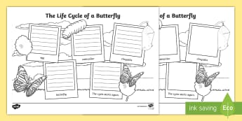 The Life Cycle of a Butterfly Writing Frames - ACSSU072, Animal reproduction, ACSSU030, life stages, caterpillar,Australia