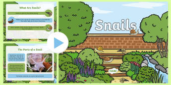 Snails PowerPoint - Snails, Shell, Snailery, Mollusc, Living Things