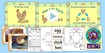 Hen Life Cycle Resource Pack - life, hens, farms, animals, chick, chicks, chicken, chickens,