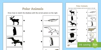 Polar Animals Shadow Matching Worksheet - polar, matching, shadow