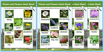 Plants and Flowers Hunt Sheet - Plants hunt, flowers hunt, investigation, finding plants, Plant growth , knowledge and understanding of the world, investigation, living things, snail, bee, ladybird, butterfly, spider