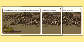 Australian Mangrove Animals Playdough Mats - Science, Year 1, Habitats, Australian Curriculum, Mangrove, Living, Living Adventure, Environment, Living Things, Animals, Body parts, Playdough Mats