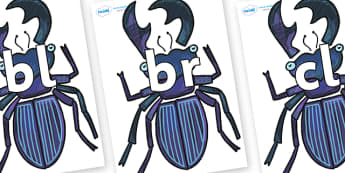 Initial Letter Blends on Stag Beetle to Support Teaching on The Bad Tempered Ladybird - Initial Letters, initial letter, letter blend, letter blends, consonant, consonants, digraph, trigraph, literacy, alphabet, letters, foundation stage literacy