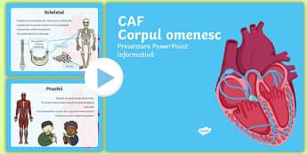Corpul omenesc - PowerPoint Informativ pentru CAF - corpul omenesc, corp, română, materiale, prezentare, stiinte, științe, lumea vie, știinșele vi