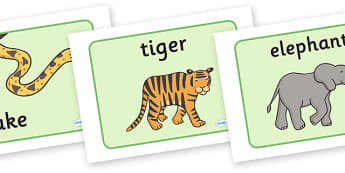 Jungle Animal Themed Display Posters - walking through the jungle, animals, jungle, display, poster, sign, banner, animal, lion, tiger, elephant, snake monkey, crocodile