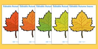 Editable Autumn Leaves - Display, editable, label, topic, Autumn, seasons, autumn pictures, autumn display, leaves, acorn, conker, atumn