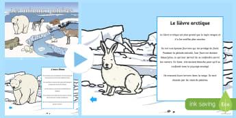 PowerPoint: L'habitat des animaux polaires - Hiver, ours polaire, banquise, lièvre arctique, cycle 2,French