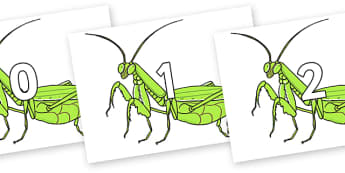 Numbers 0-100 on Praying Mantis - 0-100, foundation stage numeracy, Number recognition, Number flashcards, counting, number frieze, Display numbers, number posters