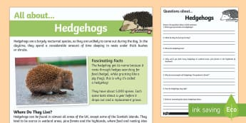 Hedgehogs Reading Comprehension - hedgehog, reading comprehension