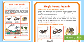 Single Parent Animals Display Poster - ACSSU030, lifecycle, parthenogenesis, asexual, reproduction, life stages, animal growth, clone, ACSS