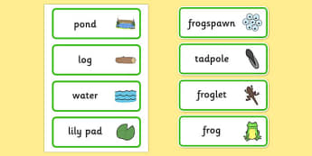 Life Cycle of a Frog Word Cards - lifecycle, visual aid, keywords