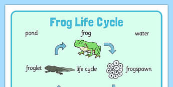 Frog Life Cycle Word Mat (Minibeasts) - Word mat, Frogspawn, Tadpole, Froglet, Frog, Minibeasts, Topic, Foundation stage, knowledge and understanding of the world, investigation, living things, snail, bee, ladybird, butterfly, spider