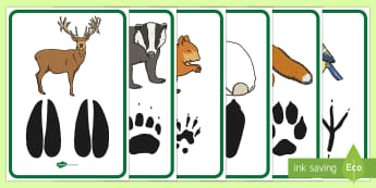 Woodland Animal Footprints Poster Pack -  forest, animals, british wildlife, footprints, tracks, poster, fox, badger, deer, bird, rabbit, squ
