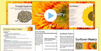 Sunflower Poetry Project Teaching Pack Lesson 4 - poetry, lesson