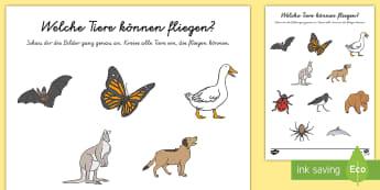 Welche Tiere können fliegen? Arbeitsblatt - Frühling, Jahreszeiten, Tiere, fliegen, Kl.1/2, spring, seasons, animals, flying, EYFS/KS1,German