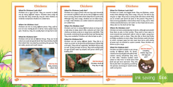 KS1 Chickens Differentiated Fact File - Children's Books, story, book, Easter, save, saving, Easter Bunny, bunny, bunnies, stories, chick,
