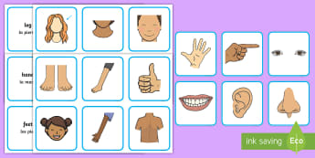 Parts of the Body Word and Picture Matching Cards English/Spanish - image, flashcards, EAL, translation