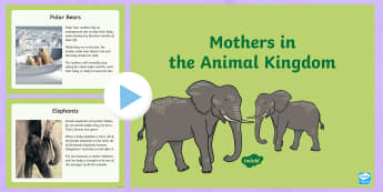 Mothers in the Animal Kingdom PowerPoint - ROI- Mothers Day/ Lá na Maithreacha, animals, mothers, babies, cubs, calves,Irish
