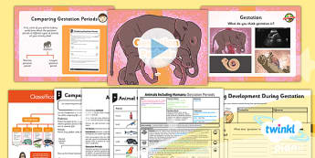 Science: Animals Including Humans: Gestation Periods Year 5 Lesson Pack 5