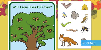 Who Lives in an Oak Tree? Display Poster and Animal Cut-Outs - Twinkl Originals, Twinkl fiction, woodland, animals, Oak, tree, acorn, woods, fox, squirrel, owl, bi
