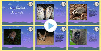 Nocturnal Animals PowerPoint - animals, nocturnal animals, nocturnal animals information powerpoint, facts about nocturnal animals, night time, ks2 science