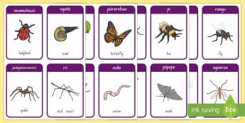 Insects Flashcards - Insects, ngārara, mumutawa, ladybird, ngata, snail, pungawerewere, spider, rō, stick insect, anuhe