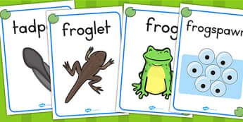 Life Cycle of a Frog Display Posters - lifecycles, life cycles