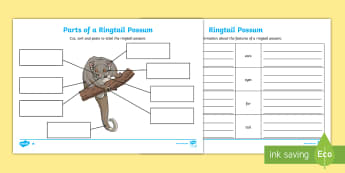 Parts of a Ringtail Possum Differentiated Activity Sheets - Australian Curriculum Biological sciences, possum, Australian animals, animal parts, labeling animal