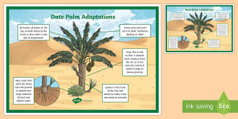Date Palm Adaptation Display Poster - Science, living World, plants, UAE, desert, date palm, tree, adaptation, display poster, classroom.