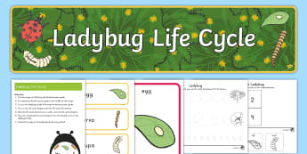 Life Cycle of a Ladybug Early Childhood  Resource Pack - Life Cycles, Ladybugs, Life Cycle of a Ladybug, Ladybug Life Cycles