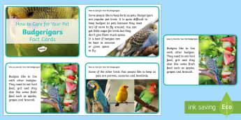 How to Care for Your Pet Budgerigar Fact Cards - birds, keeping pets, animal welfare, budgie, budgies, petcare, pet care, pet bird,