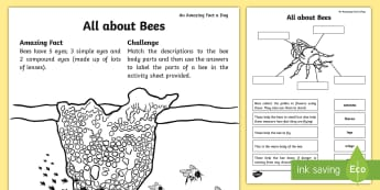 All about Bees Activity Sheet - Amazing Fact Of The Day, activity sheets, powerpoint, starter, morning activity, June, bees, minibea