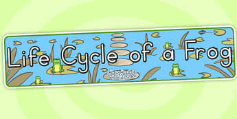 Life Cycle of a Frog Display Banner - header, display, lifecycles