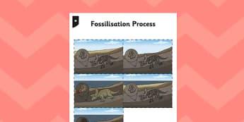 Fossilisation Process Cards - fossilisation, process, cards