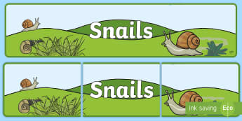 Snails Banner - , shell, snailery, mollusc, living things,Irish