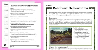 Y5 Rainforest Deforestation Differentiated Reading Comprehension Activity