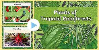 Plants of the  Rainforest PowerPoint