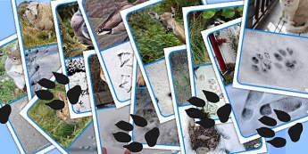 Footprints Display Photos - footprints, display photos, display