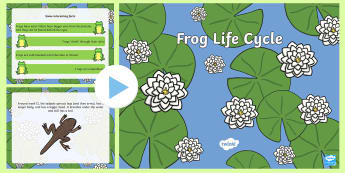 Life Cycle of a Frog - frog life cycle, frog life cycle powerpoint, frog powerpoint, life cycle of a frog, life cycles, frogs, minibeasts
