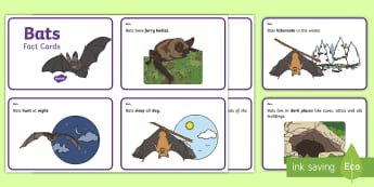 Bat Fact Cards - bats, mammals, living things, fact cards, display, science,Irish