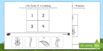 Life Cycle of a Ladybug Activity Sheet - USA Early Childhood Science: Life Cycles, ladybug life cycle, worksheet, ladybug activity sheet, lif