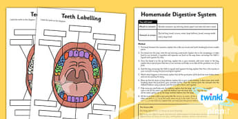 Science: Animals Including Humans Year 4 Unit Home Learning Tasks