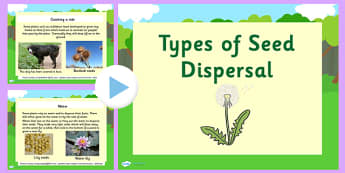 Types of Seed Dispersal PowerPoint - seed dispersal, seed dispersal powerpoint, plant germination powerpoint, plants, how plants disperse their seeds, ks2