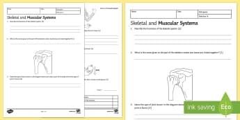 KS3 Skeletal and Muscular Systems Homework Activity Sheet