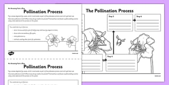 Pollination Process Activity Sheet -challenge, research, home, education, learning, nature, growth, reproduction, plants, insects, worksheet