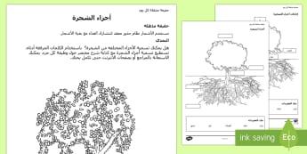 نشاط أجزاء الشجرة - أجزاء الشجرة، معلومات، أسماء ، مفردات، ورقة عمل، حقائق