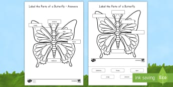 Label the Parts of the Butterfly Activity Sheet - USA Early Childhood Science: Life Cycles, butterfly, parts of butterfly, label butterfly, science la